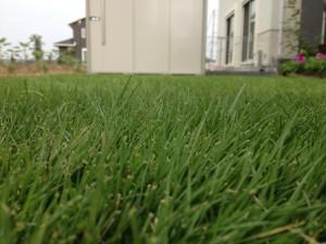 芝生を横からみた写真