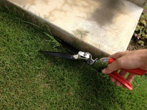 際の芝刈り